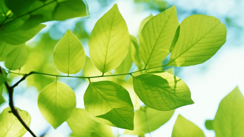 leaves_form_plant_green_90012_1920x1080